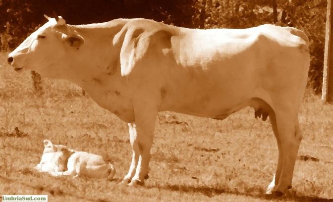 Cannara,il veterinario controvento