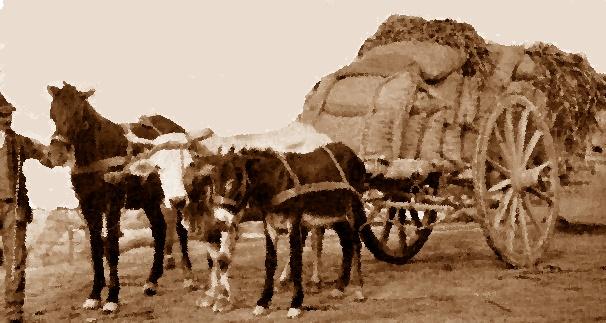 Norcia, disordini di piazza per un carro di grano
