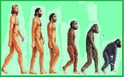 Medico ternano sfida Darwin: è la scimmia che discende dall'uomo